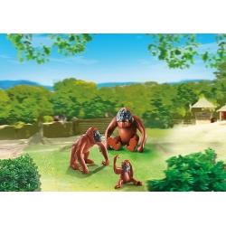 Orangutani s mládětem